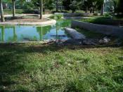 English: Crocodile Park in Davao City, Philippines