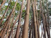 Bamboo-Bonsai-ing by François Roche