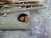 Poor puppy hiding in the old mattresses near debris