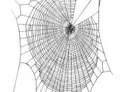 The orb web of Zygiella spiders have missing sectors.