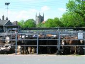 Hailsham Cattle Market, East Sussex, England.