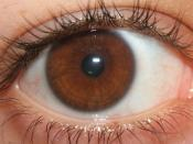 English: A photo of my iris. Uploading it so that I may add it to the 'Eye Color' Wikipedia page.