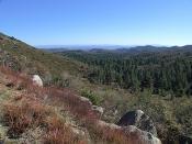 English: Cleveland National Forest. Original description: Mount Laguna, California.