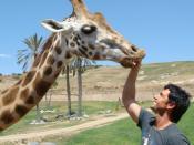 English: Outback Zack checks his friend's teeth.