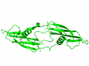 English: Tertiary structure of human artemin (PDB: 2GYR) rendered using PyMOL (Delano Scientific Freeware)