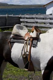 Chilean saddle