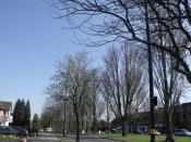 Brook Lane, Billesley - trees