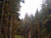 Kodiak Rain Forest