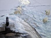 Three Polar bears approach the USS Honolulu, 280 miles from the North Pole.