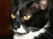 Mabel profile