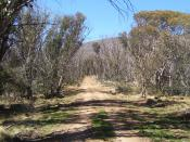 English: Description: A picture taken, of a walking trail in Namadgi National Park. Source: Own work Date Taken: October 5th 2006 Author: Dfrg.msc Uploader: Dfrg.msc Permission: Given