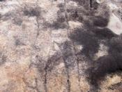 English: Ku-ring-gai_Chase_-_petroglyph, via Waratah Track. Figure is 1.7 metres long; notable features include the swollen leg and the lack of a neck. Rock is triassic Hawkesbury Sandstone, 220 million years of age. It shows Baiame (ref:Josephine McDonal