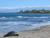 Sea turtles on a beach in Hawaii
