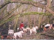 Fox hunting has been a recent controversial issue, particularly in the United Kingdom.