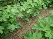 Soil Health: Productivity with cover crops