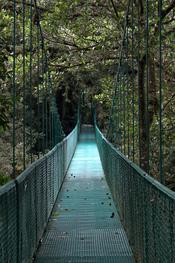 English: suspension bridge in Selvatura Park, Monteverde, Costa Rica Deutsch: Hängebrücke im Selvatura Park, Monte Verde, Costa Rica