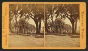 Salem Common, by G. K. Proctor