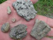 Fossils from a roadcut in central Tennessee. According to the