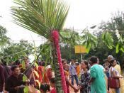 Fancy palm tree