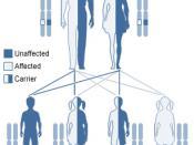 Category:Medical genetics images (Original text : Autosomal recessive inheritance.)