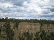 More Chilcotin flood basalts and trees in Chasm Provincial Park