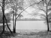 English: Thoreau's Cove, Concord, Massachusetts. Thoreau, Henry David (1817-1862)--Homes & haunts. Lakes & ponds. United States--Massachusetts--Walden Pond. Dry plate negatives.
