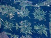 NASA photo of deforestation in Tierras Bajas project, Bolivia, from ISS on April 16, 2001.