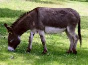 Traditional Animal Nickname: Donkeys/les ânes