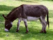 Traditional Animal Nickname: Donkeys/les ânes