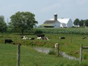 English: Amish dairy farm in Lancaster County, Pennsylvania Nederlands: New order Amish melkveehouderij in Lancaster County, Pennsylvania