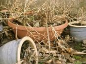 Dead plant in pots