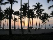 English: Sun setting behind palm trees in Dominican Republic