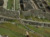 Peru Travel: Agricultural terraces at Machu Picchu