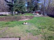Elmer: King of the Yard