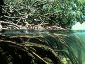 Mangrove Conservation by SP Godrej Marine Ecology Centre