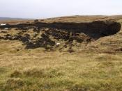Peat curring at Ulsta, Yell (island), Shetland