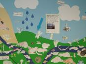 Water Cycle 4