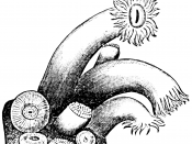Line art drawing of polyps.