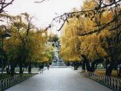 Autumn colours in Punta Arenas