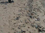 April 29, 2003 - Falmouth, MA - Division E2 - Bouchard Oil Spill