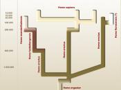 English: Human evolution splitter view