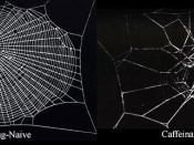 The effect of caffeine on spider web construction