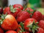 A bowl of Strawberries. Français : Un bol de fraises.