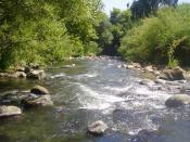English: en:Hasbani River, (Snir River) Upper Galilee, Israel עברית: נחל שניר בשמורת טבע נחל שניר