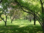 A tree lined path through the Lyle E. Littlefield Ornamental Gardens
