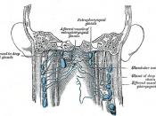 Neck lymph nodes