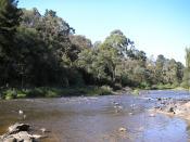 English: A typical riverside scene in Warrandyte. Image taken by me in 2006.