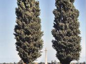 War cross and trees at a Commonwealth War Graves Commission cemetery