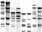 Rice Genetics II_p418