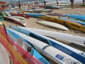 Surf Ski Carnival Alexandra Heads Surf Life Saving Club Queensland Australia